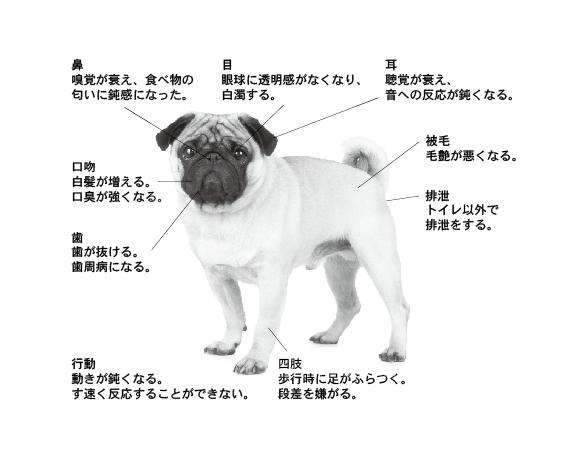 画像に alt 属性が指定されていません。ファイル名: ill_kaigo1.png